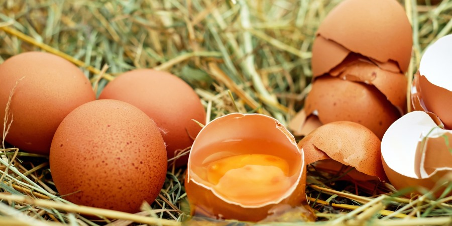 Four additional products withdrawn over Fipronil