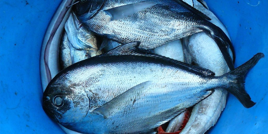 Rise in foodservice fish prices driven by inflation