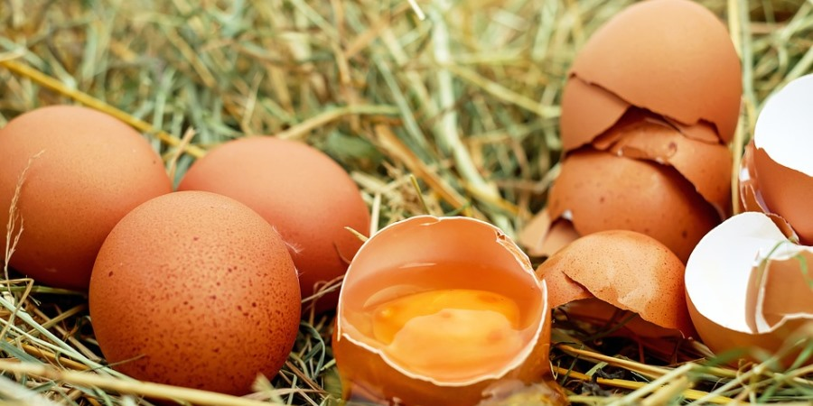 Changes to the EU Egg Marketing Regulations