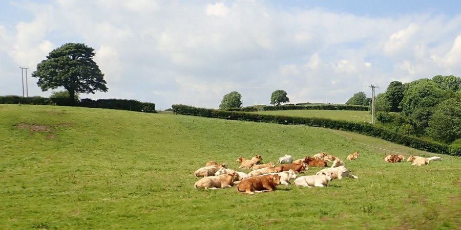 NFU urges leadership candidates to back British food production