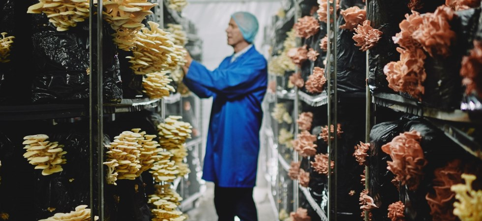 Little-known mushroom varieties helping drive Tesco's plant-based range