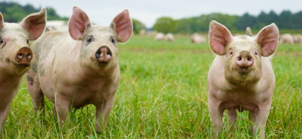 UK loses 'A' grade in global test of animal welfare leadership