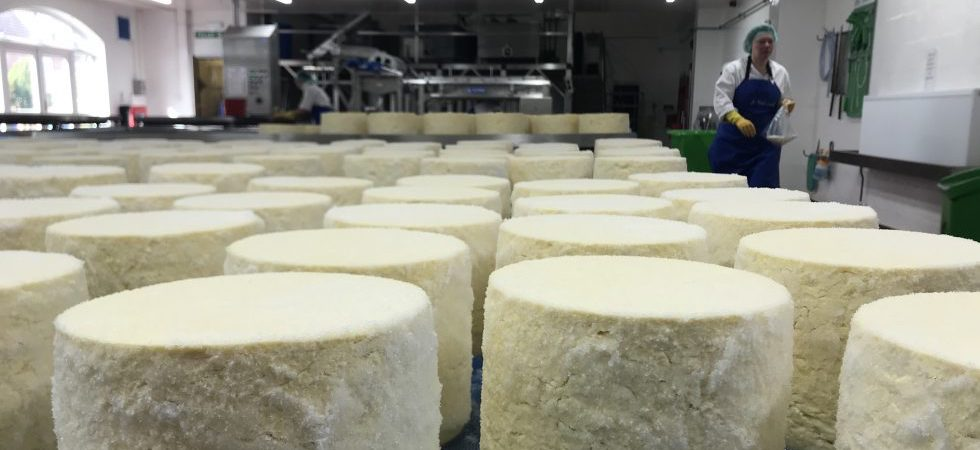 Specialist cheese makers take action to survive