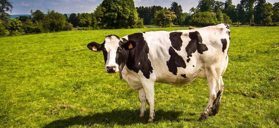NFU urges MPs to pressure Government to support British dairy industry