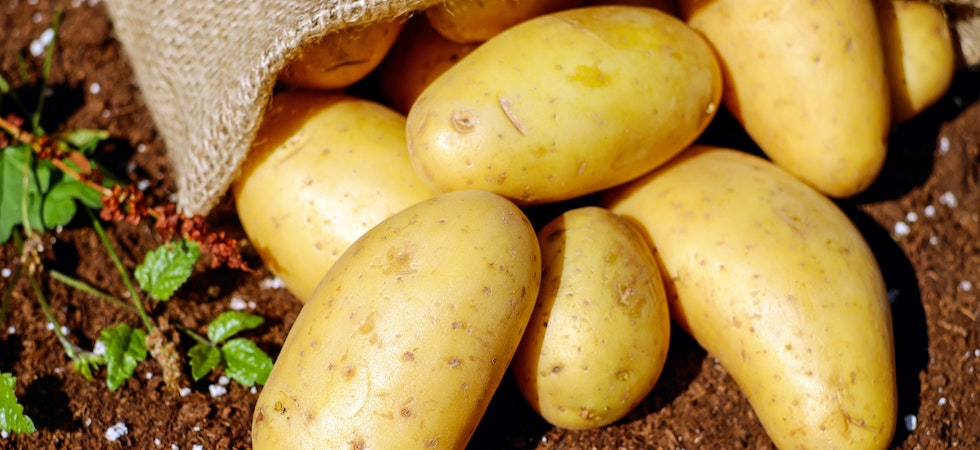 McCain launches £25 million fund to support potato industry